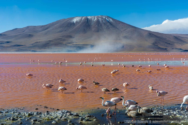 Flamingo Mountain, Lago Colorada, Bolivian Highlands