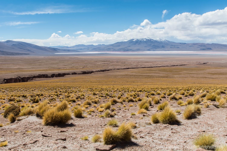 Desert Canyon Lands, Bolivian Highlands
