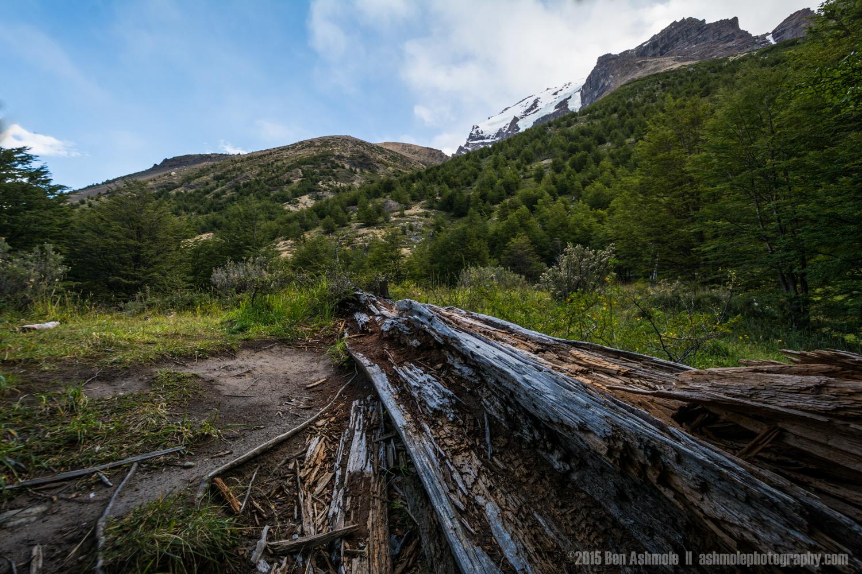Fallen Tree, Torres Del Paine, Patagonia, Chile