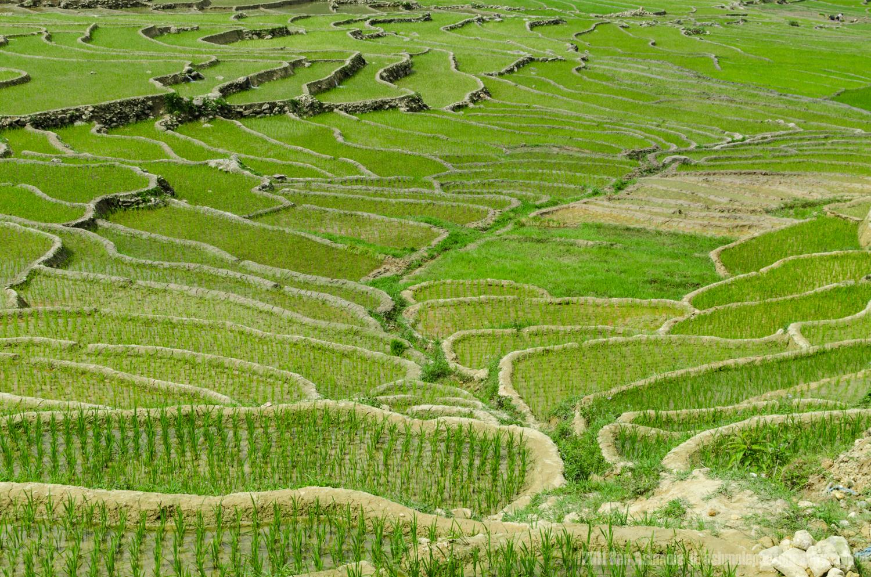 Rice Terraces, Sapa, Vietnam, Ben Ashmole