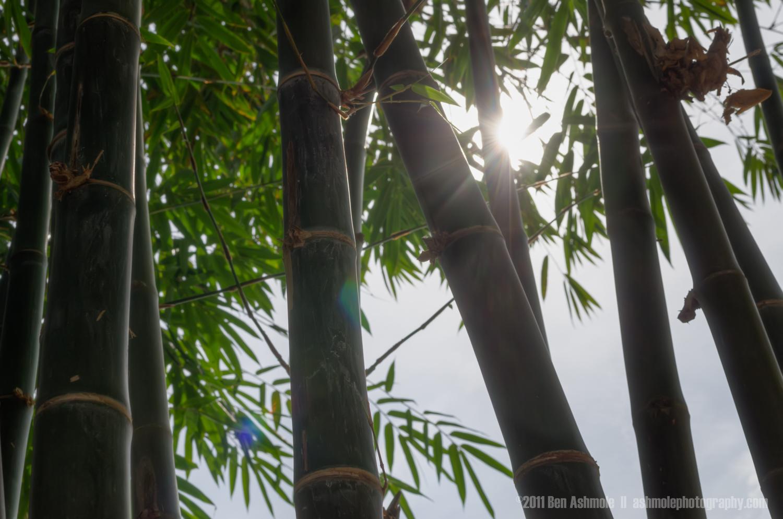 Bamboo Dreaming, Mekong Delta, Vietnam