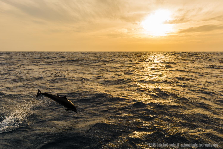 Sunset And Dolphin, San Blas, Panama