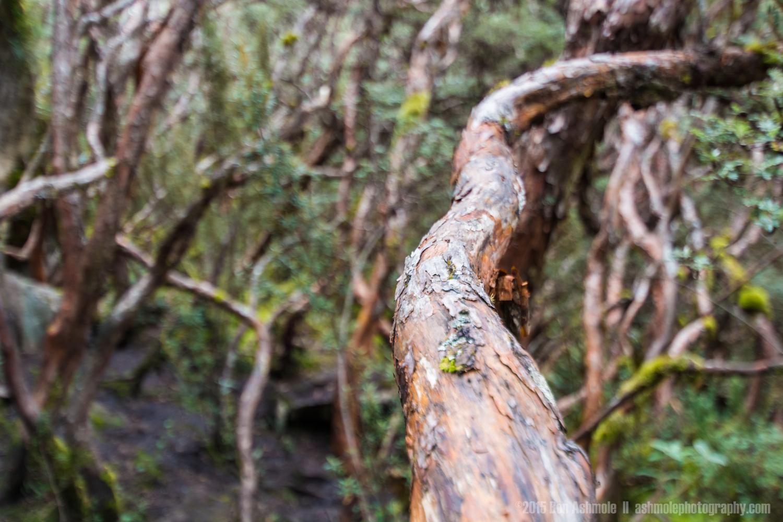 Cajas National Park 2, Ecuador