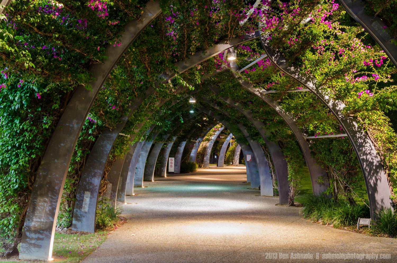 Overgrown Walkway, Brisbane, Queensland, Australia