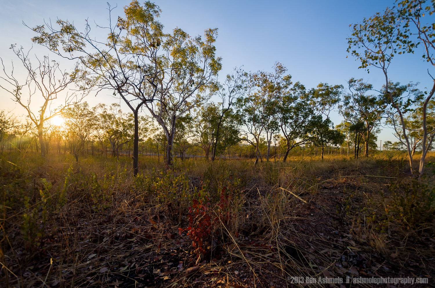 Early Morning In The Bush, Katherine Gorge, NT, Australia
