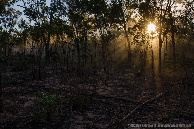 Light In The Forest 3, Kakadu National Park, NT, Australia