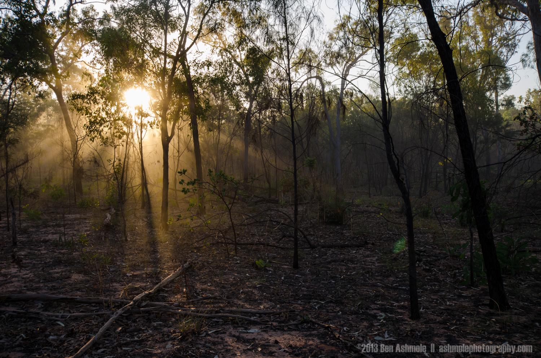 Light In The Forest 2, Kakadu National Park, NT, Australia