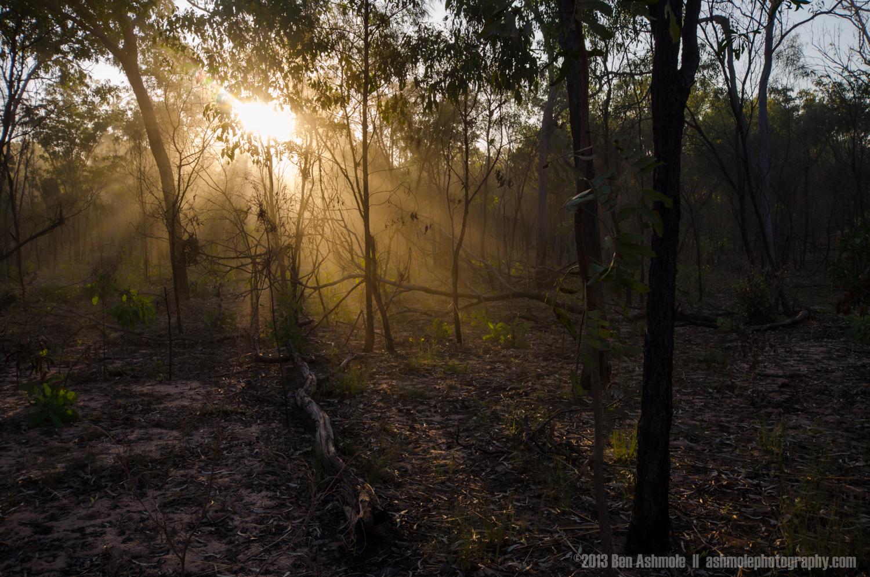 Light In The Forest, Kakadu National Park, NT, Australia