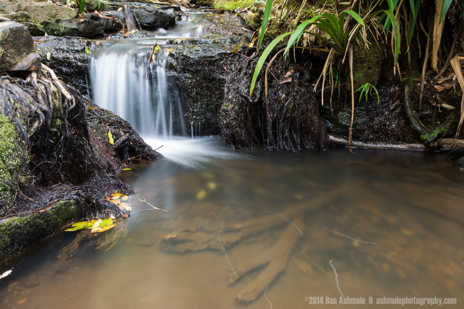Tiny Plunge Pool, Twin Falls, Springbrook National Park, QLD, Au