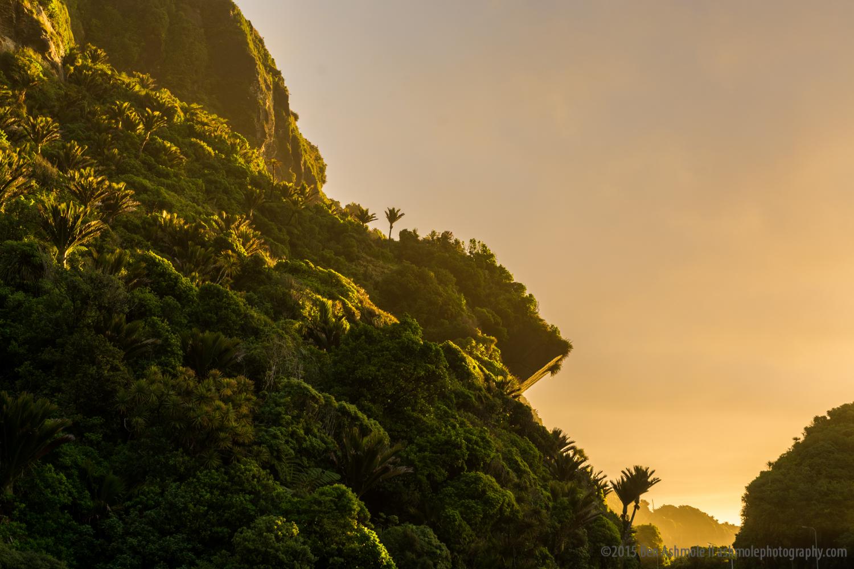 Rainforest Glow, Punakaiki, New Zealand