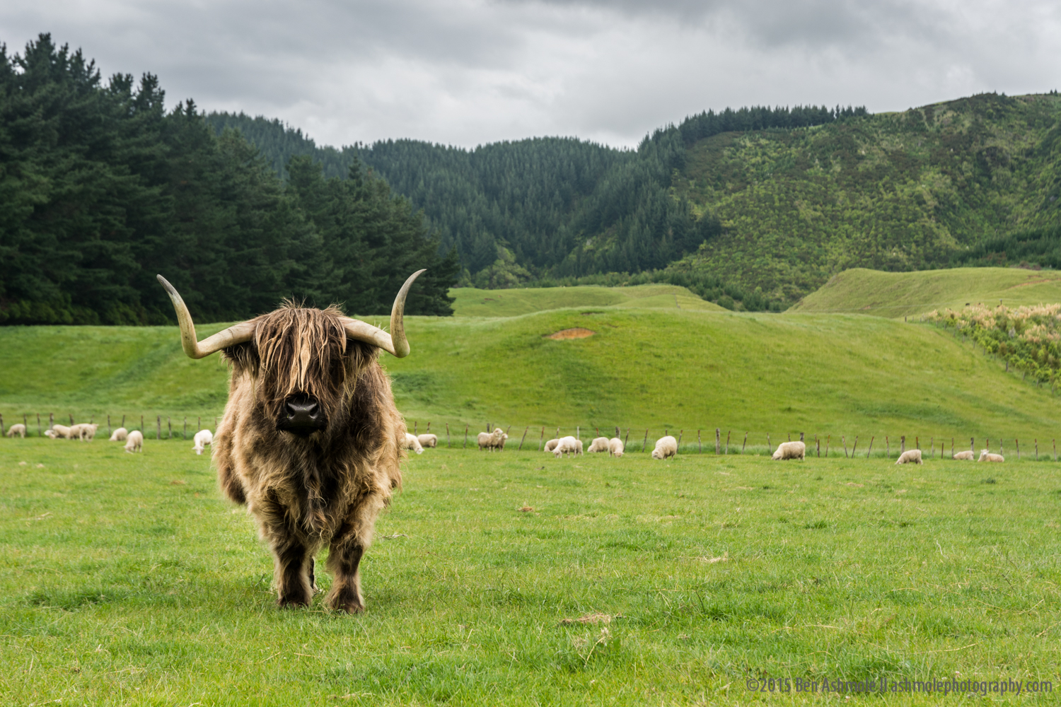 Get Out Of My FIeld, Rotoroa, New Zealand