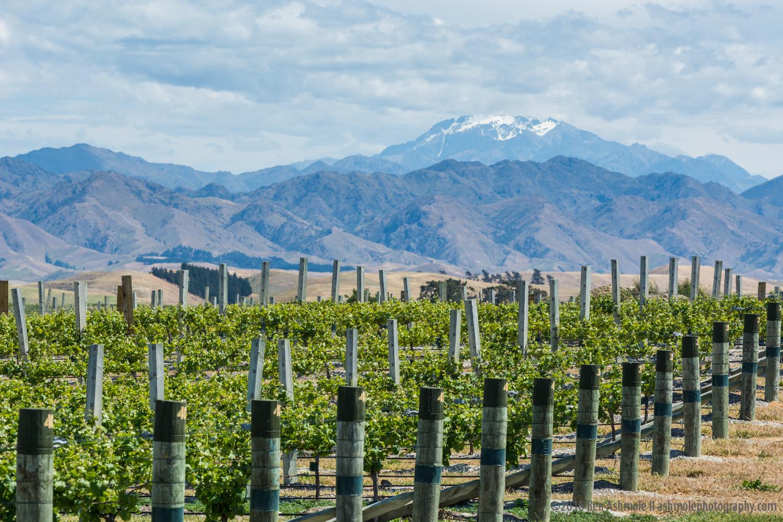 The Vineyard & Mountain, Malborough, New Zealand