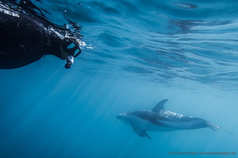 Swimming With Dusky Dolphins 2, Kaikoura, New Zealand