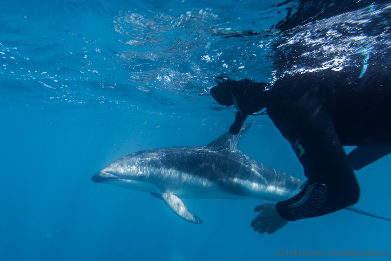 Swimming With Dusky Dolphins, Kaikoura, New Zealand