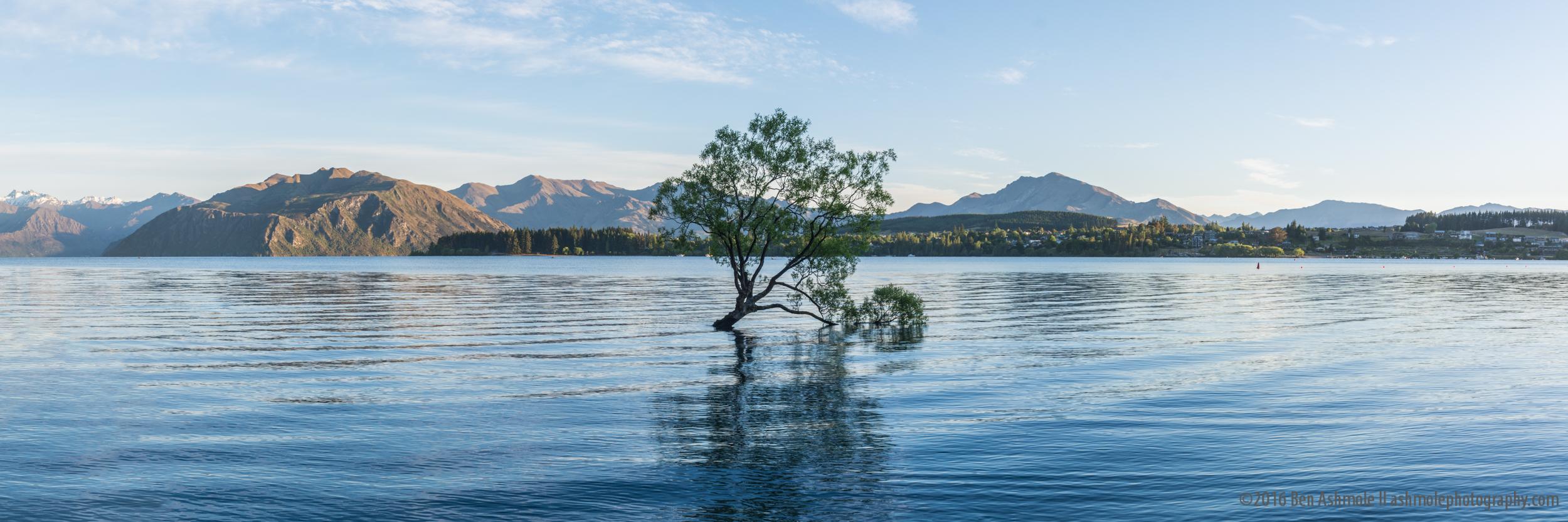 That Wanaka Tree Panorama, Wanaka, New Zealand