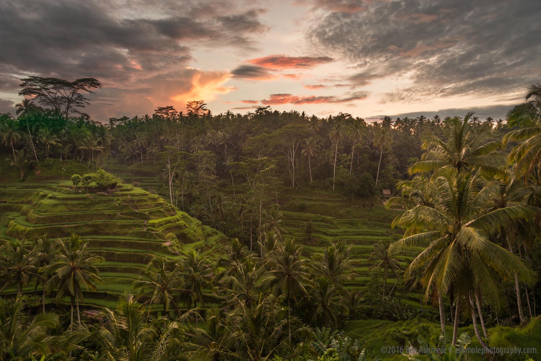 Tegalalang Rice Terraces 2, Bali, Indonesia