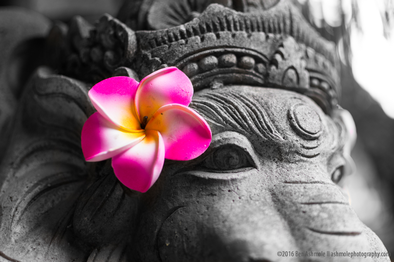 Ganesh's Flower, Ubud, Bali, Indonesia