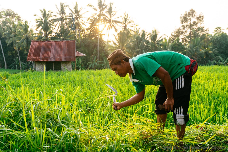 Morning Work, Ubud, Bali