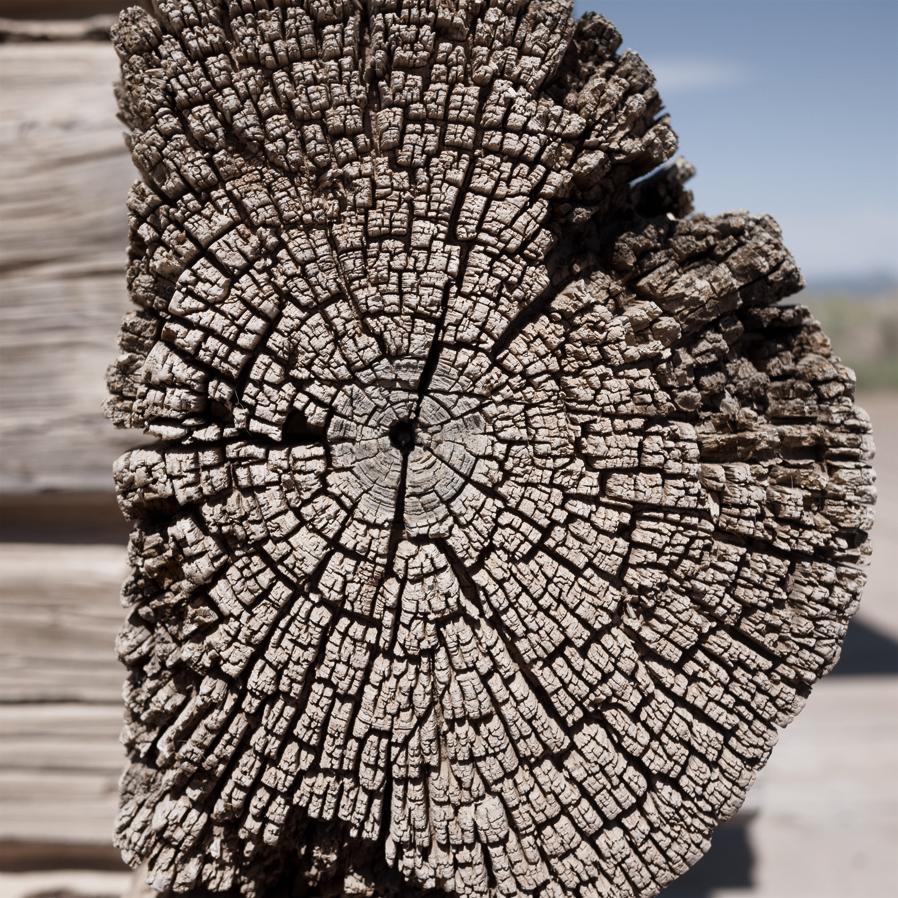 woodgrain-11web.jpg
