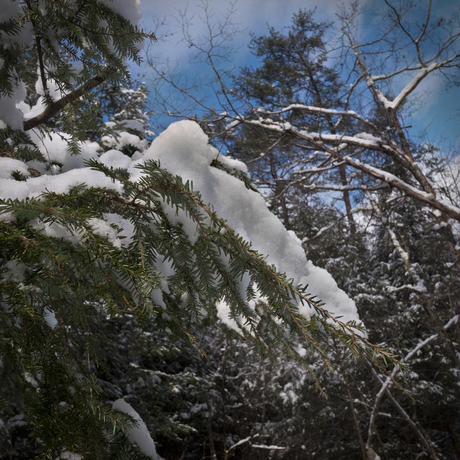 Snow Clumps