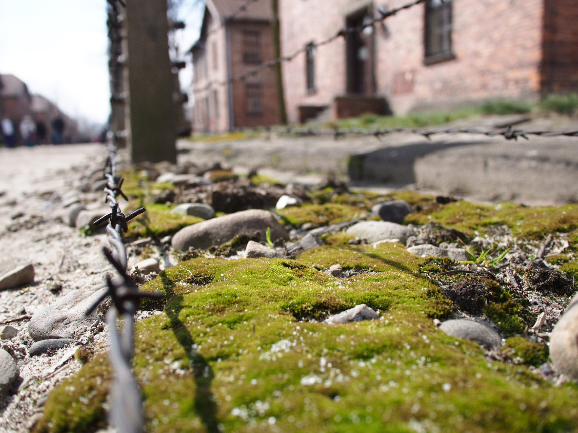 Moss grows between the layers of electric fence. The trees we walked by and touched were present when Jewish prisoners were in the camp. To see things that are a live and thriving is such a contrast to the atmosphere of this somber and horrible place.