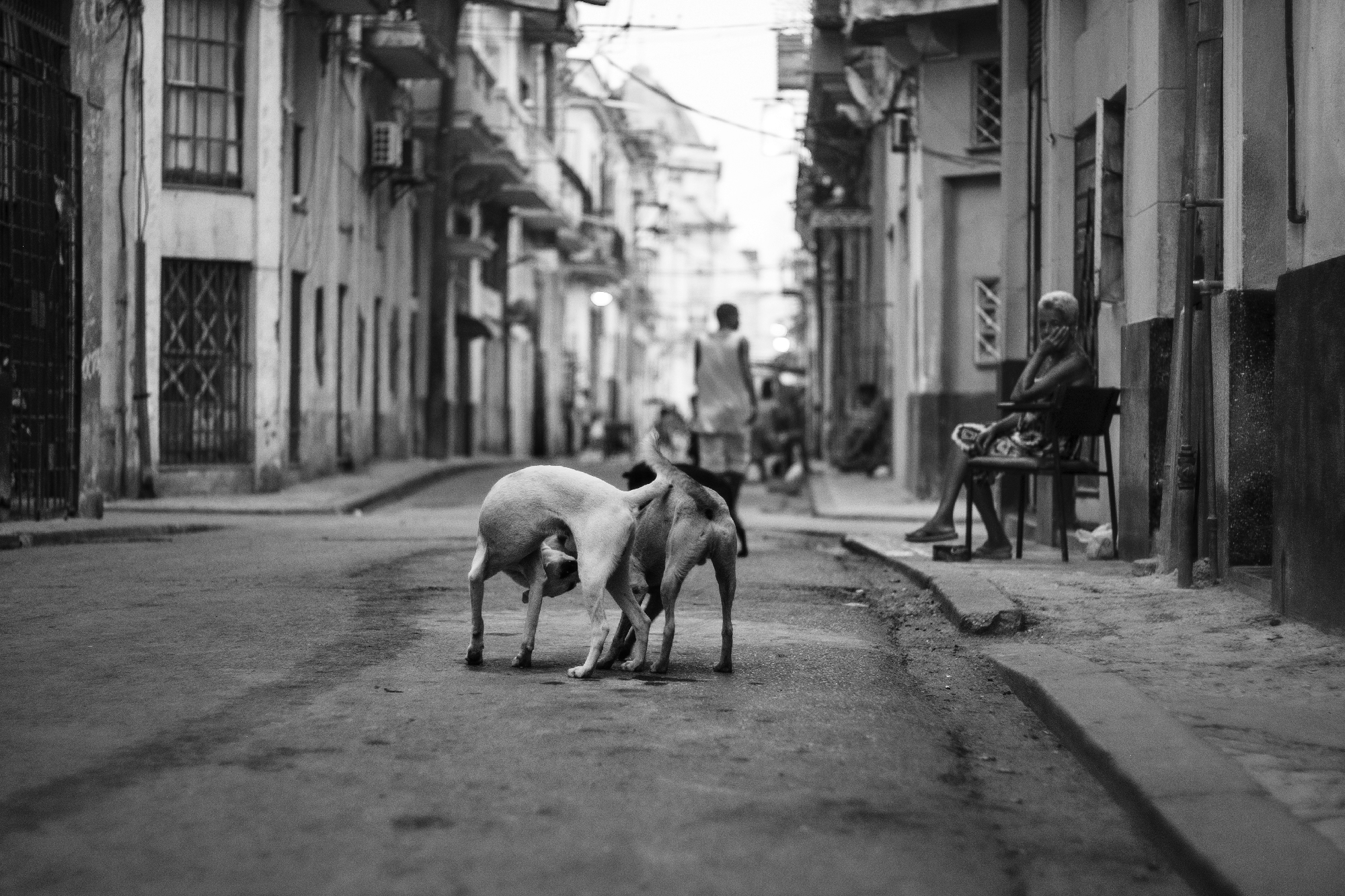 All throughout Old Havana, street dogs and cats ruled supreme. Most of the time they found a shadow to lie in to wait out the sweltering heat. But once the sun began to set and traffic calmed a bit, it was time to play and find scraps to nibble on.