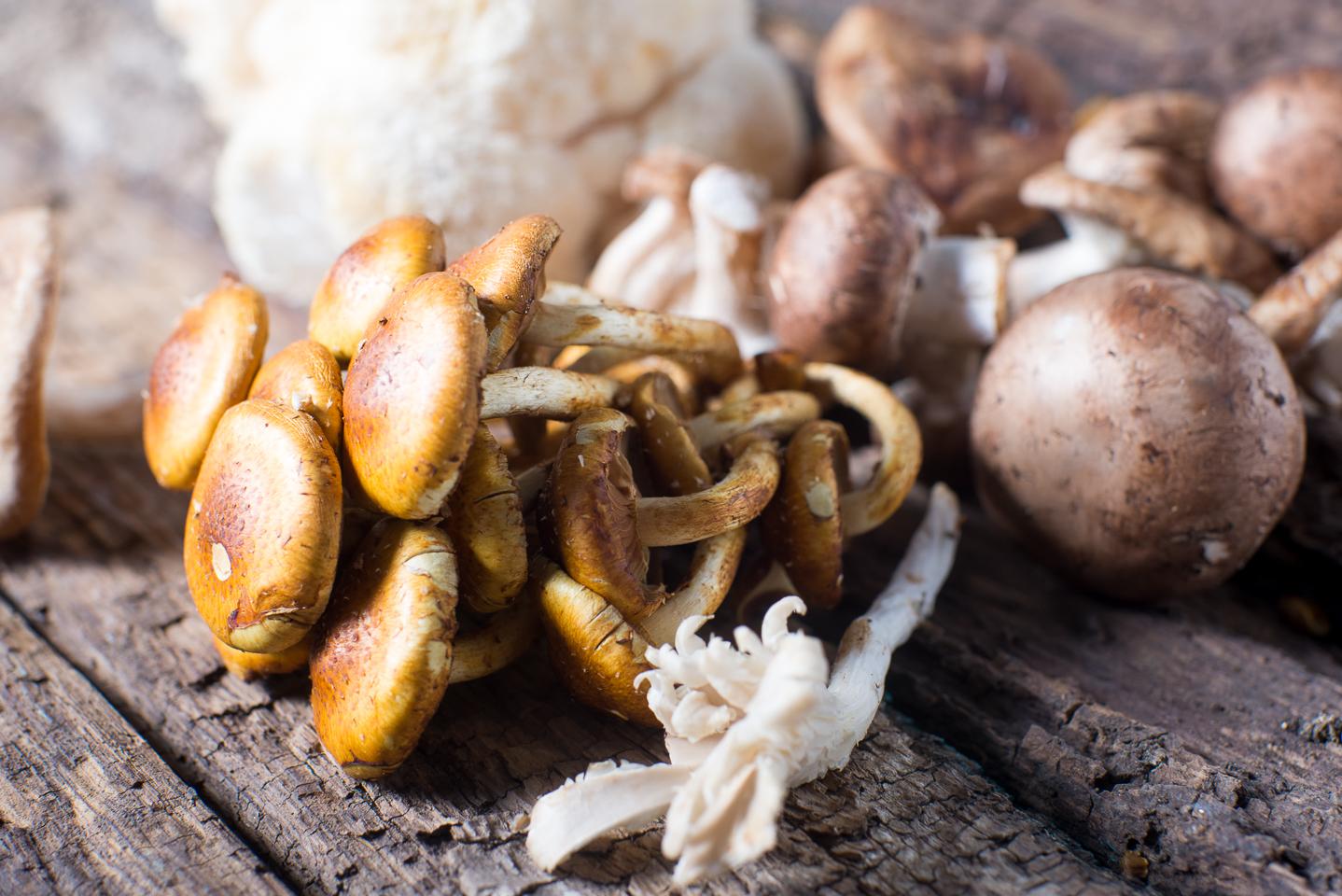 Edible Assortment of Wild Colorado Mushrooms