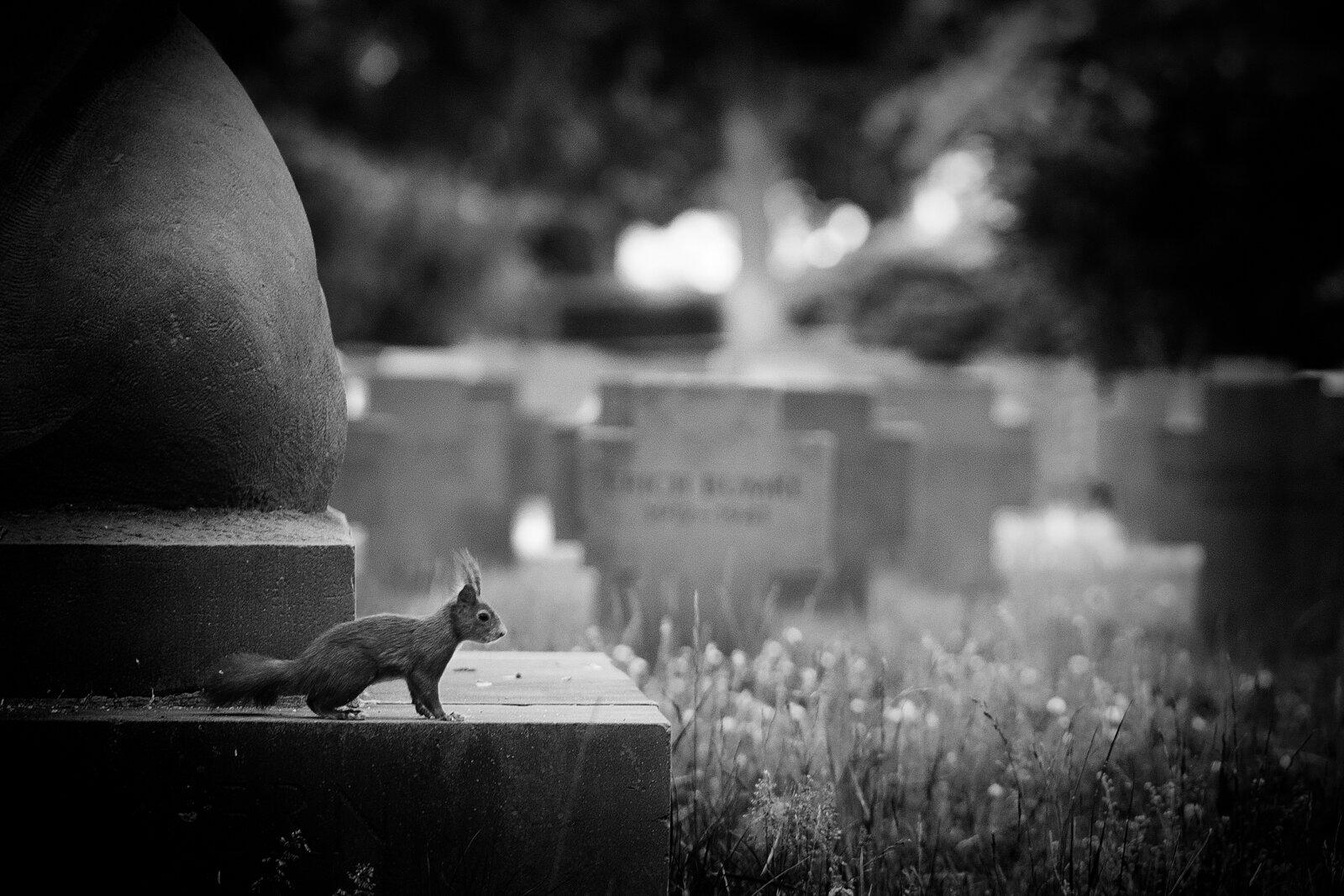 10__D7C0241_2014_05_Friedhof-Edit-4-Edit-2____Friedhof-KA.jpg