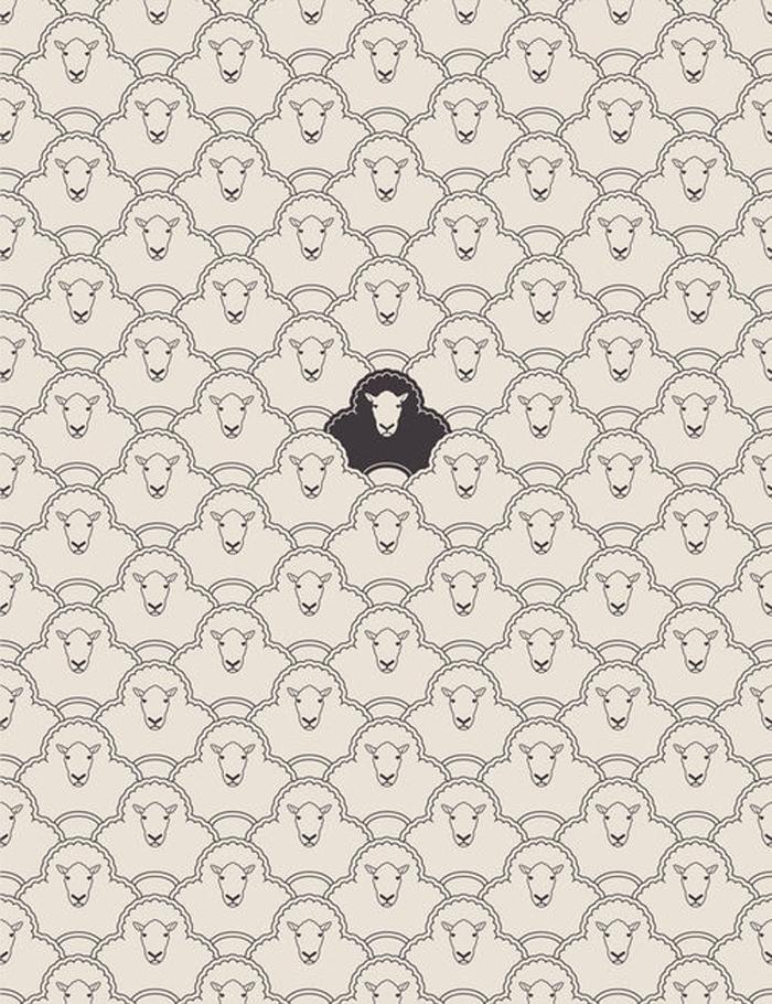 Black Sheep / Julia