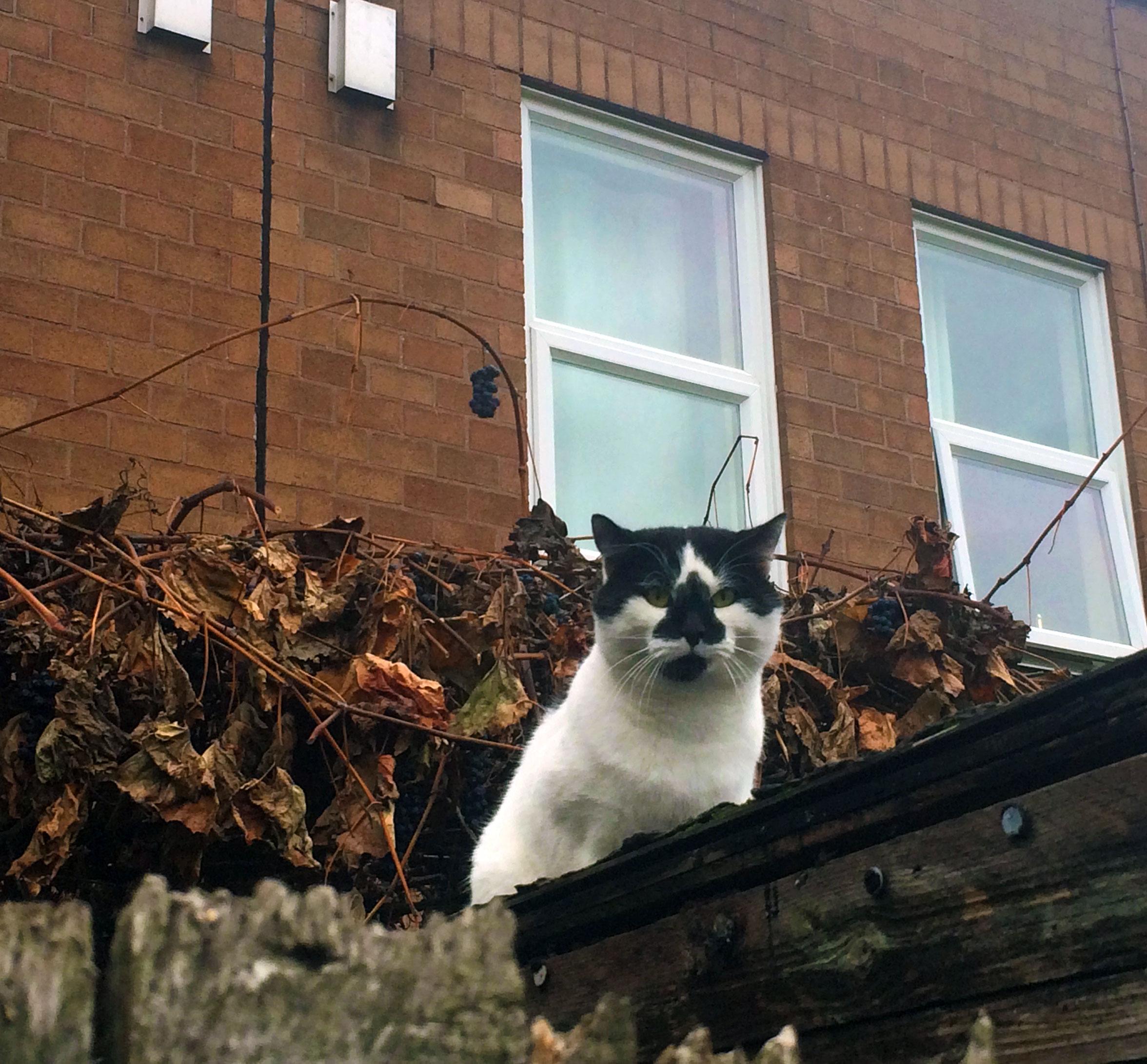 London cat - secondfloorflat.com
