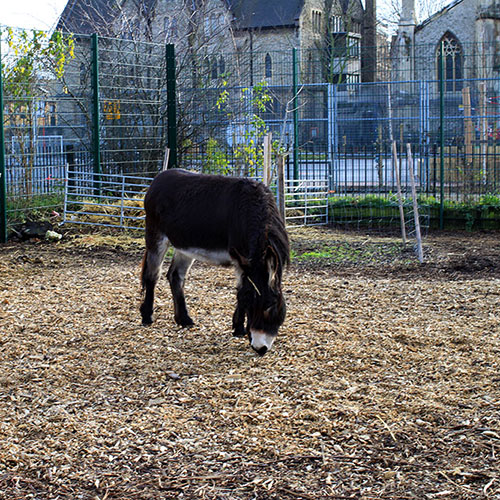 Spitalfields City Farm - secondfloorflat.com