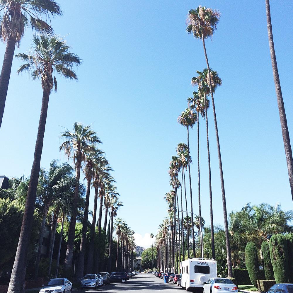 palm trees in LA | Second Floor Flat