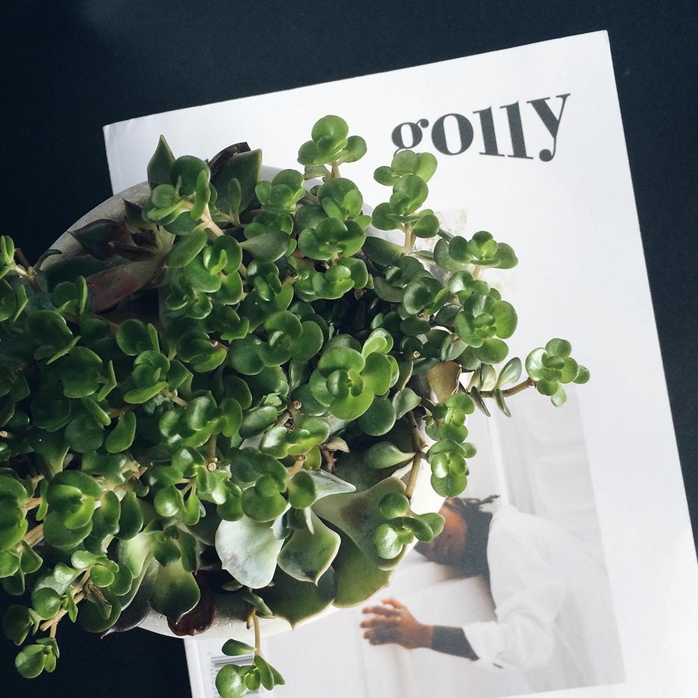 succulents | Second Floor Flat