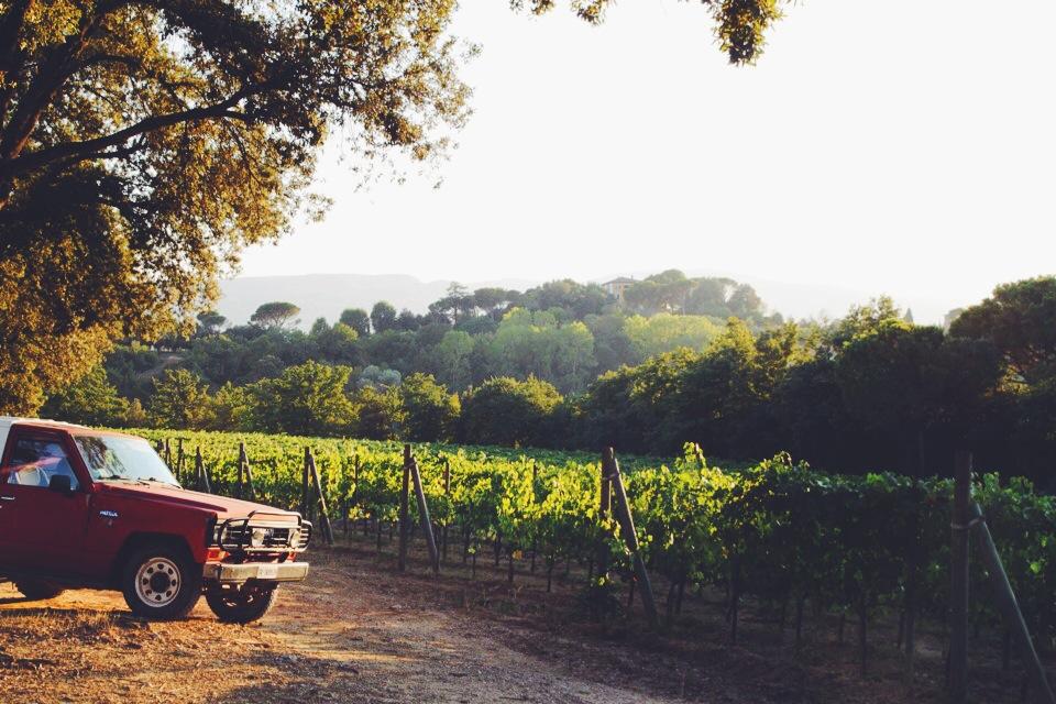 Vineyards of Poggio Piglia.