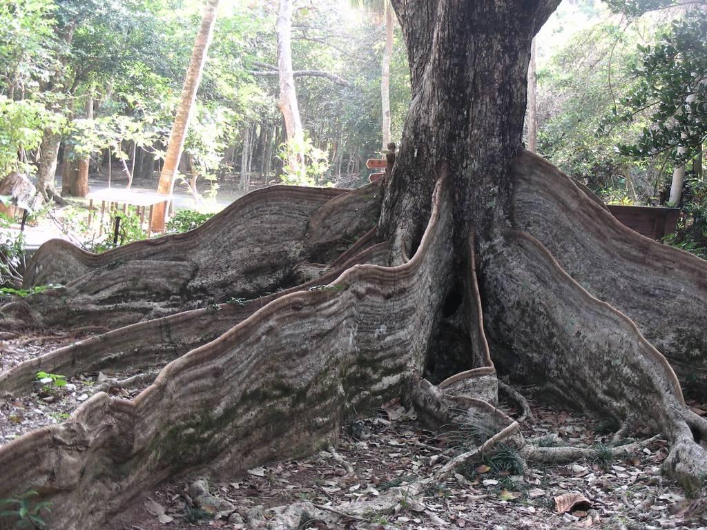 墾丁公園樹齡逾百年的「銀葉板根」為恆春半島熱門最具特色景點。(圖片來源:http://www.geolocation.ws/)