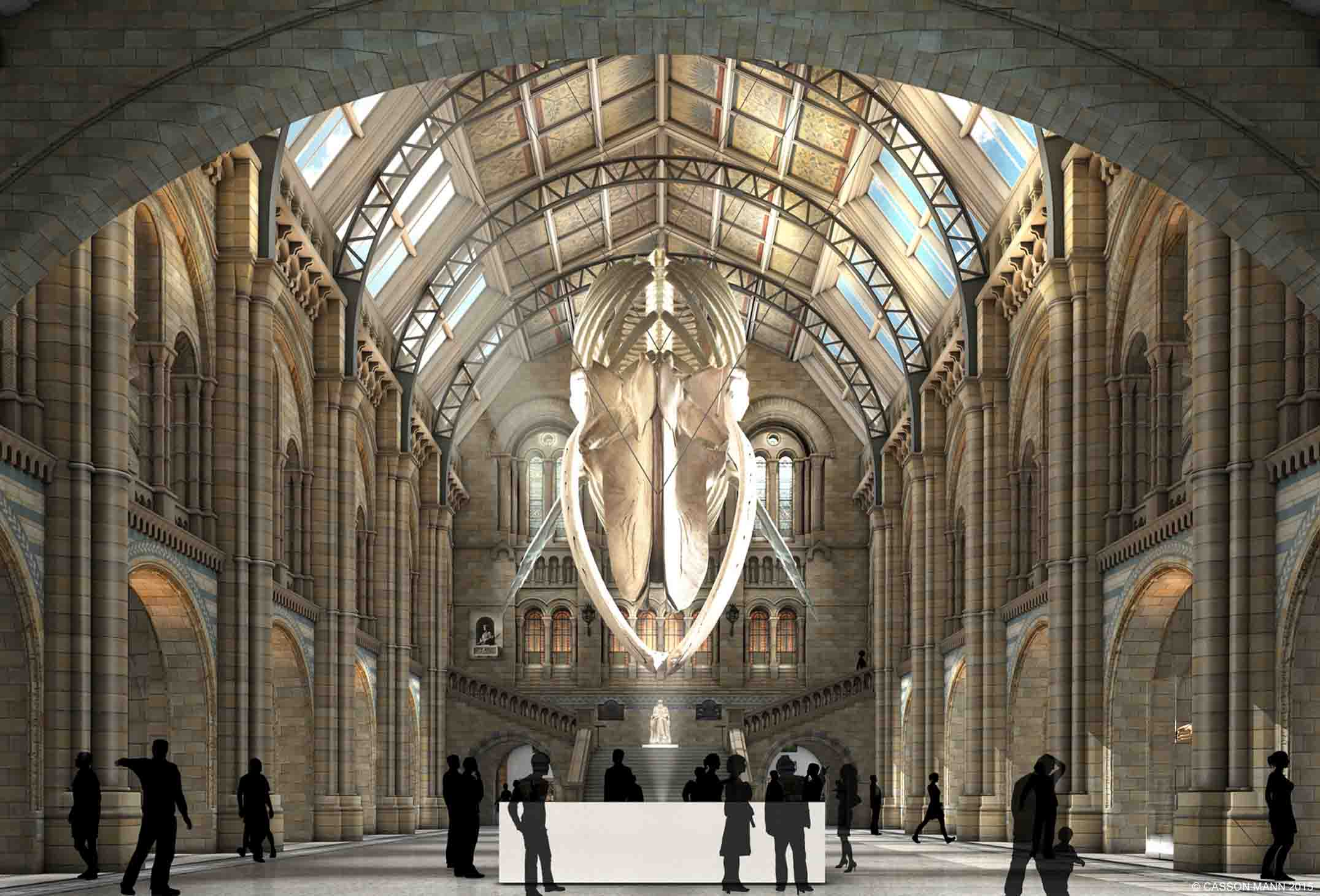 How the Natural History Museum's Hintze Hall will look like in 2017 with the Blue Whale display. ©2015 Casson Mann
