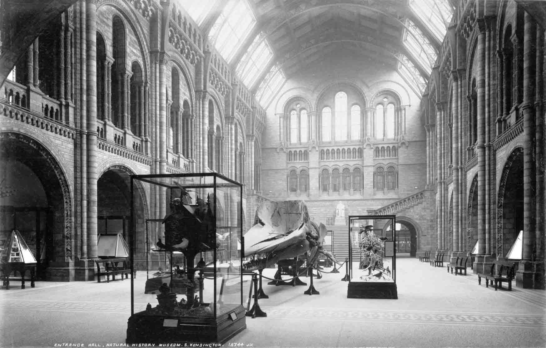 View of Central Hall, looking north, from July 1902. © The Trustees of the Natural History Museum, London