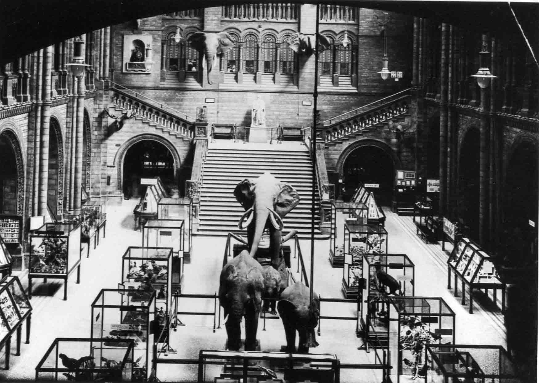 The Natural History Museum in 1924. © The Trustees of the Natural History Museum, London