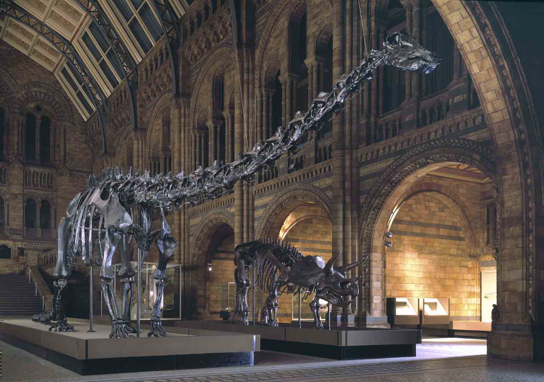 "Diplodocus ""Dippy"" and Triceratops in  1979.  © The Trustees of the Natural History Museum, London"