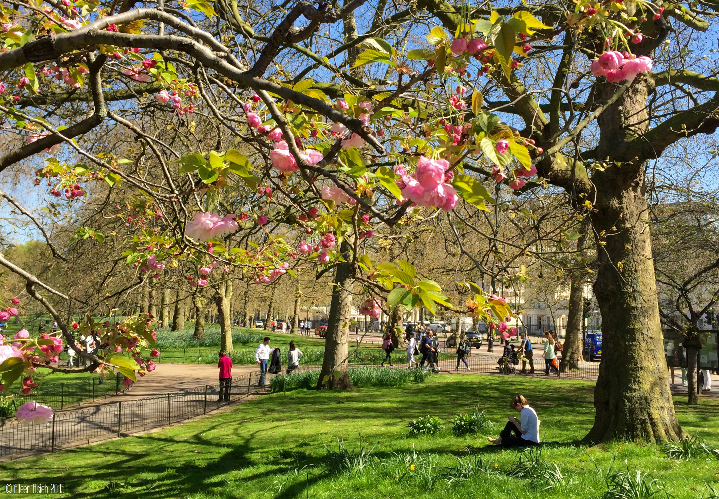 London's manyparks and gardens are the perfect places to soak up the spring sunshine. 倫敦眾多的公園與花園是享受春天陽光的最佳地點。 © Eileen Hsieh