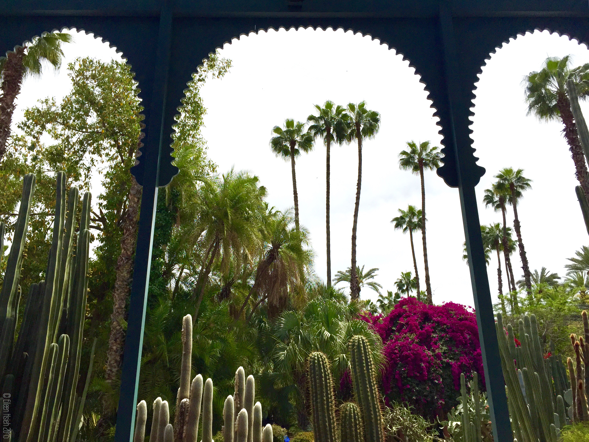 Tropical colors are dominant in the beautiful Jardin Majorelle. 馬若雷爾花園裡處處都有熱帶的色彩。