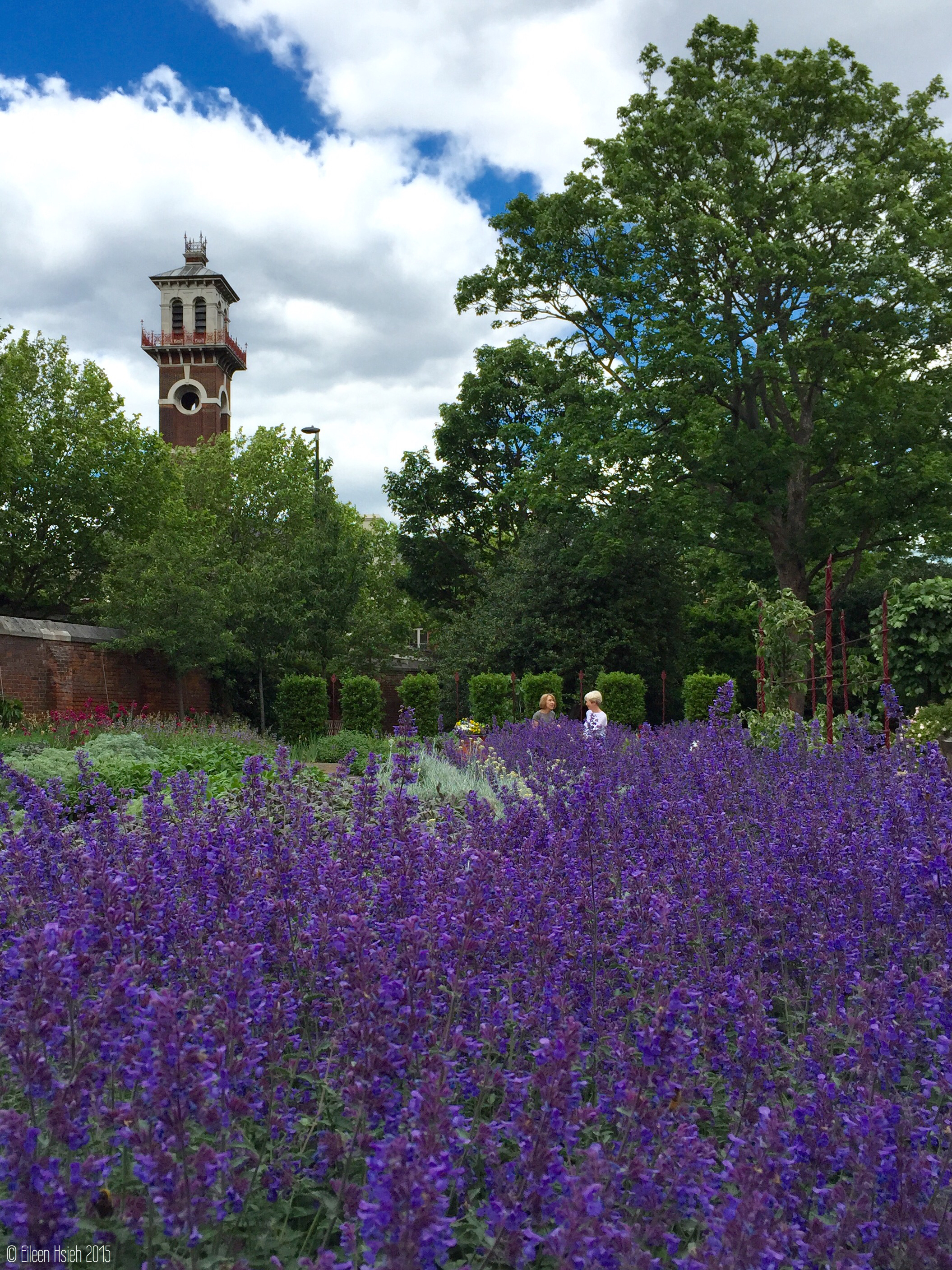 Lambeth Palace Garden London lavender followthatbug follow that bug.JPG