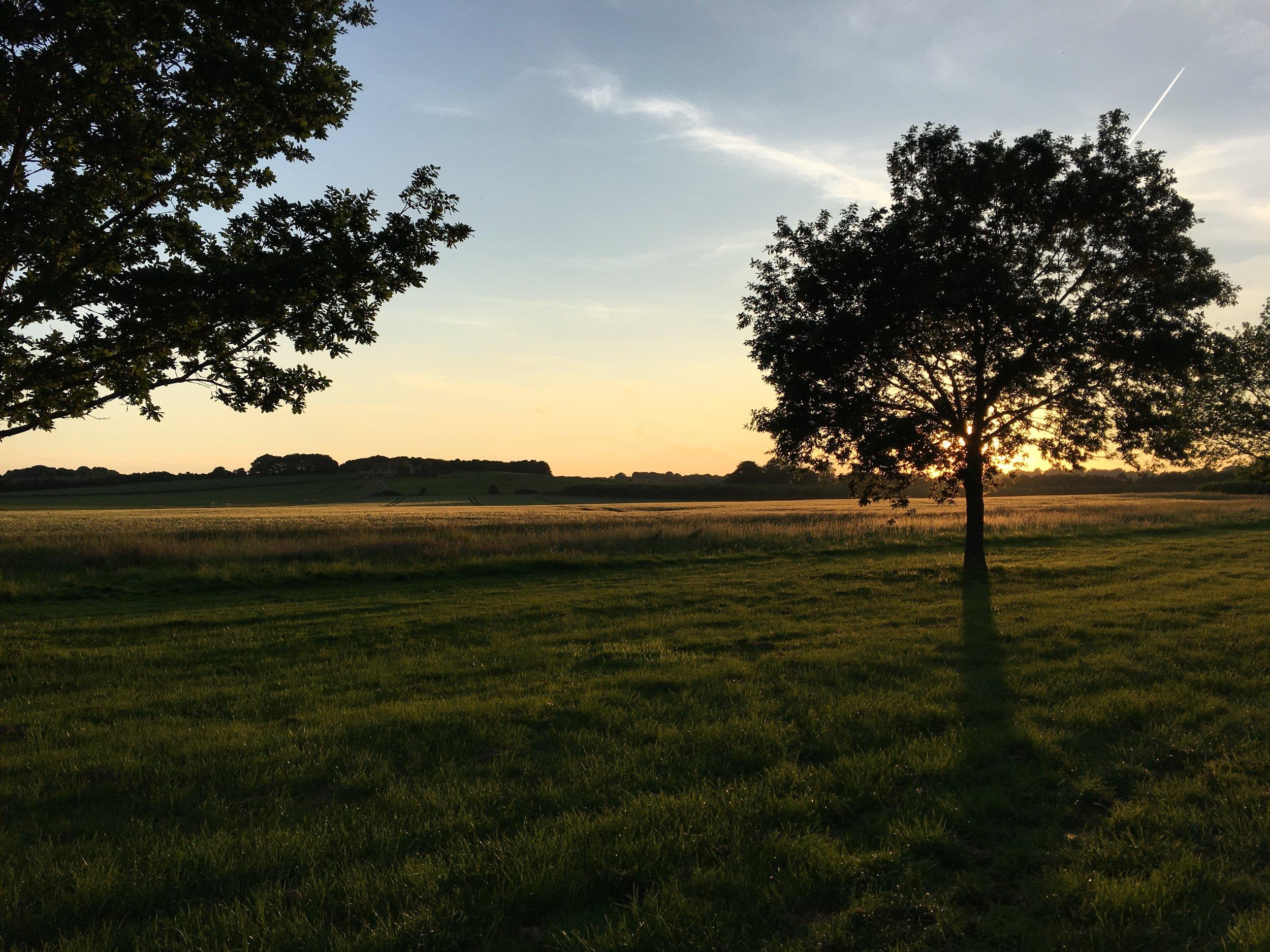 Eileen Hsieh follow that bug Waddesdon Estate sunset.jpg