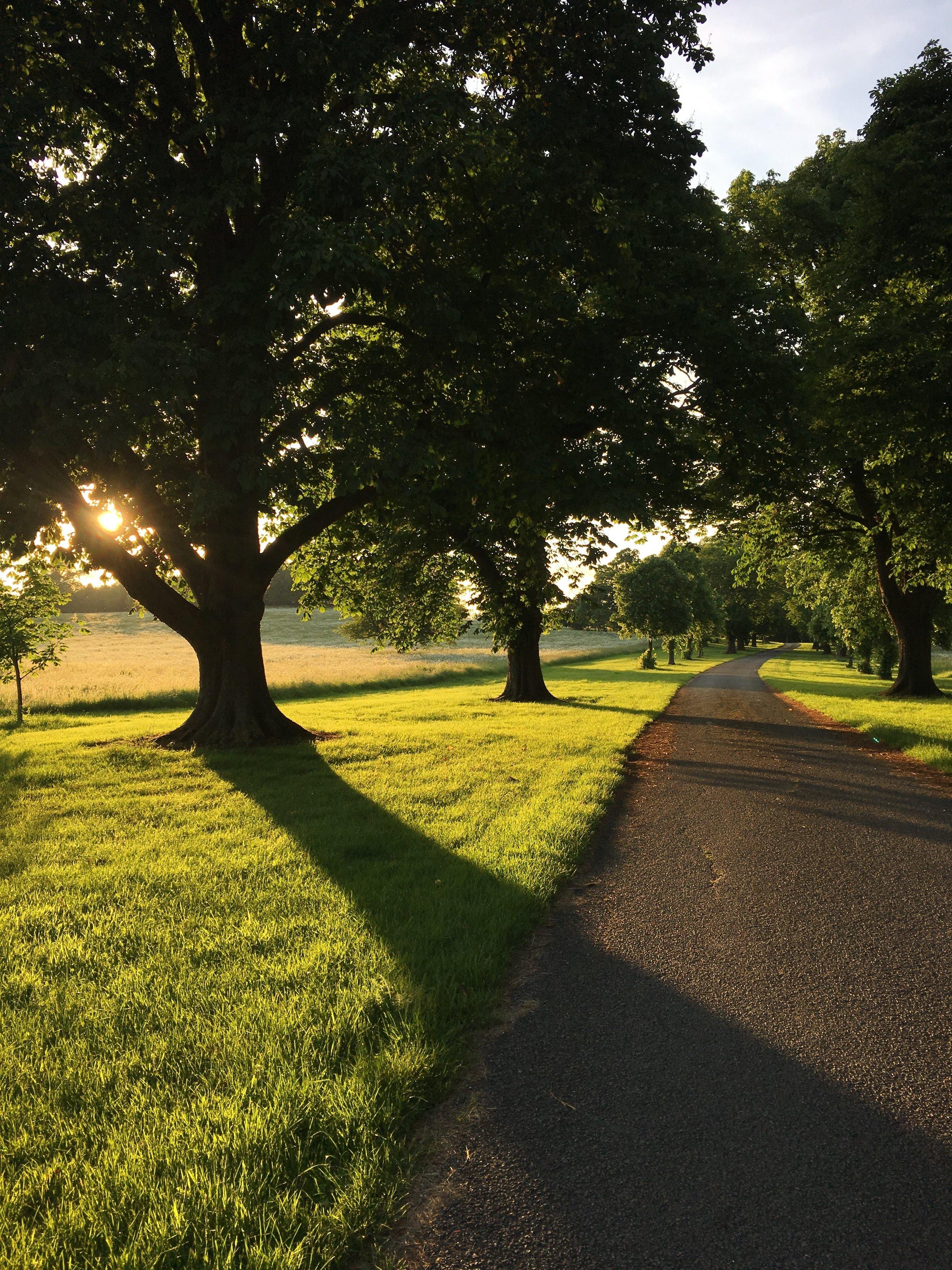 Eileen Hsieh follow that bug Waddesdon Estate trail sunset.jpg