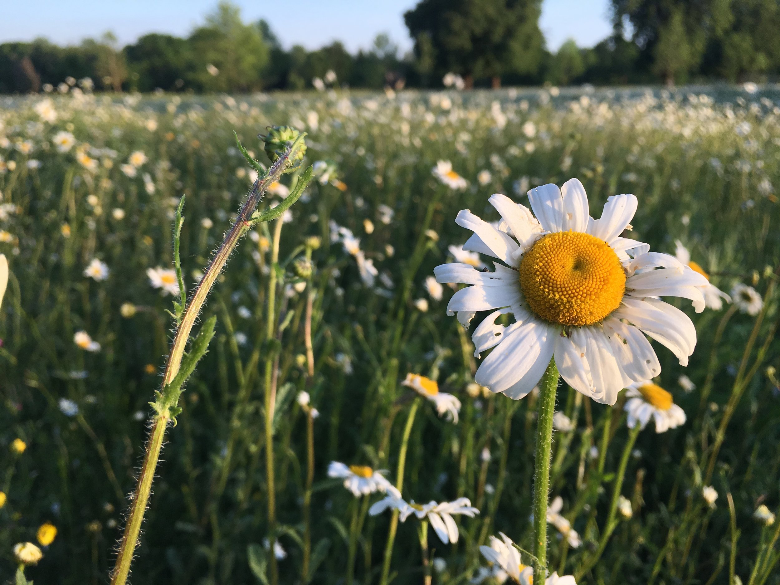 Eileen Hsieh follow that bug Waddesdon Estate wildflowers meadow.jpg