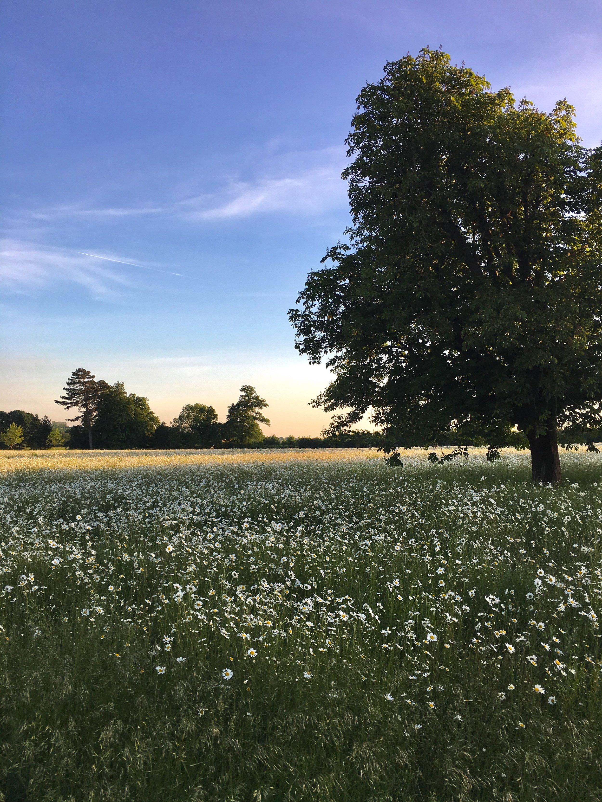 Eileen Hsieh follow that bug Waddesdon Estate wildflowers meadow sunset.jpg