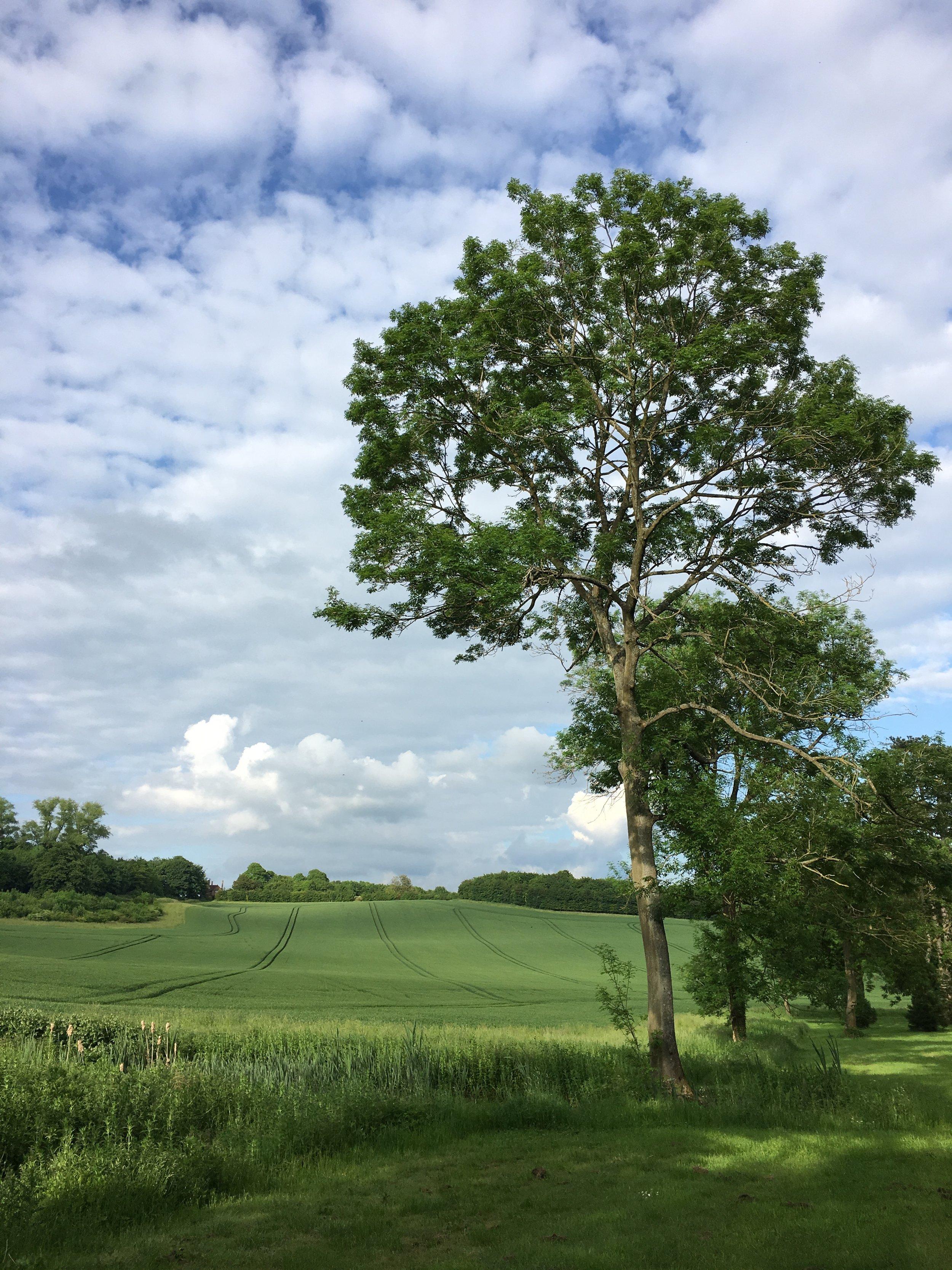 Eileen Hsieh follow that bug Waddesdon Estate farm 2.jpg