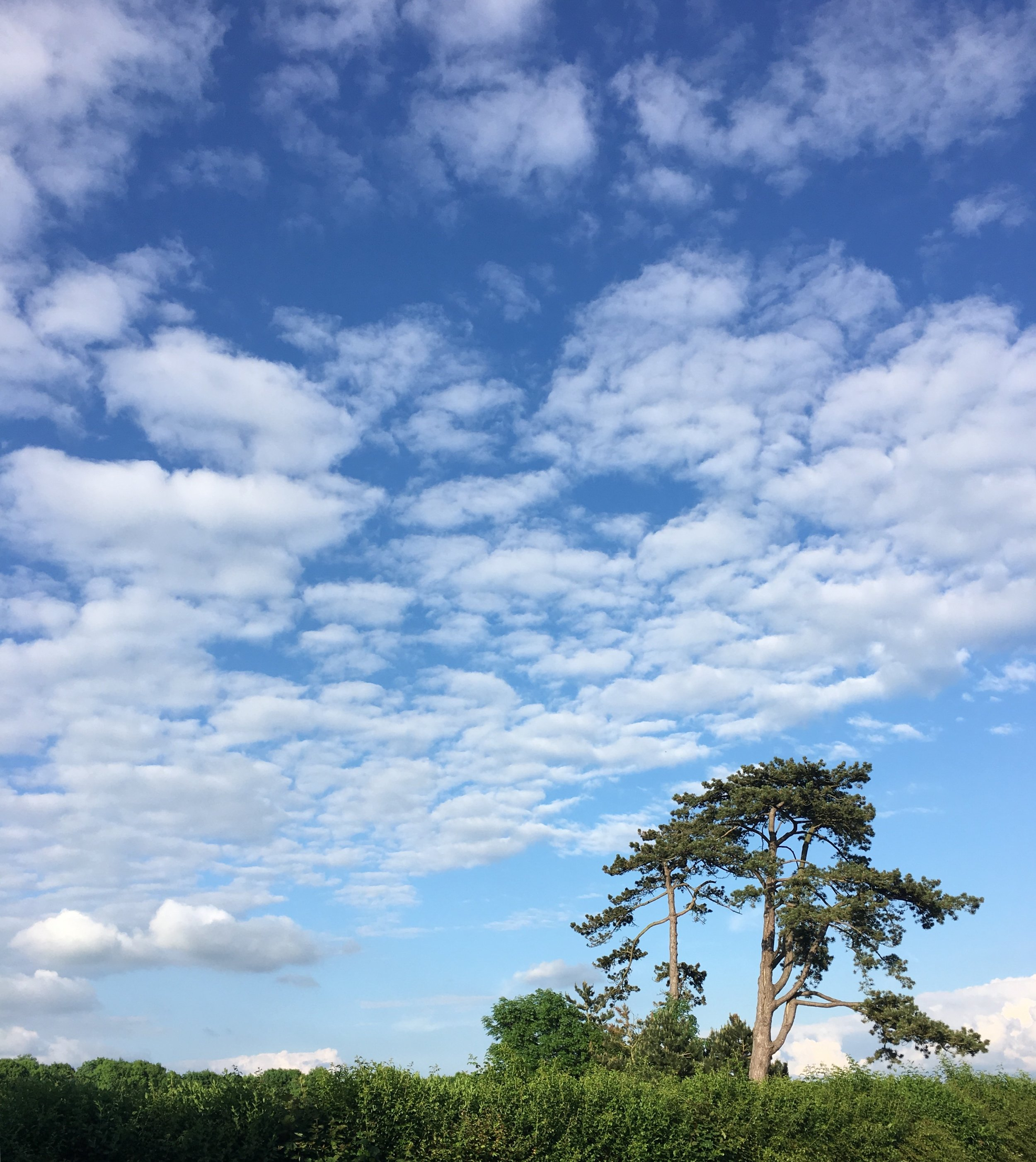 Eileen Hsieh follow that bug Waddesdon Estate tree.jpg