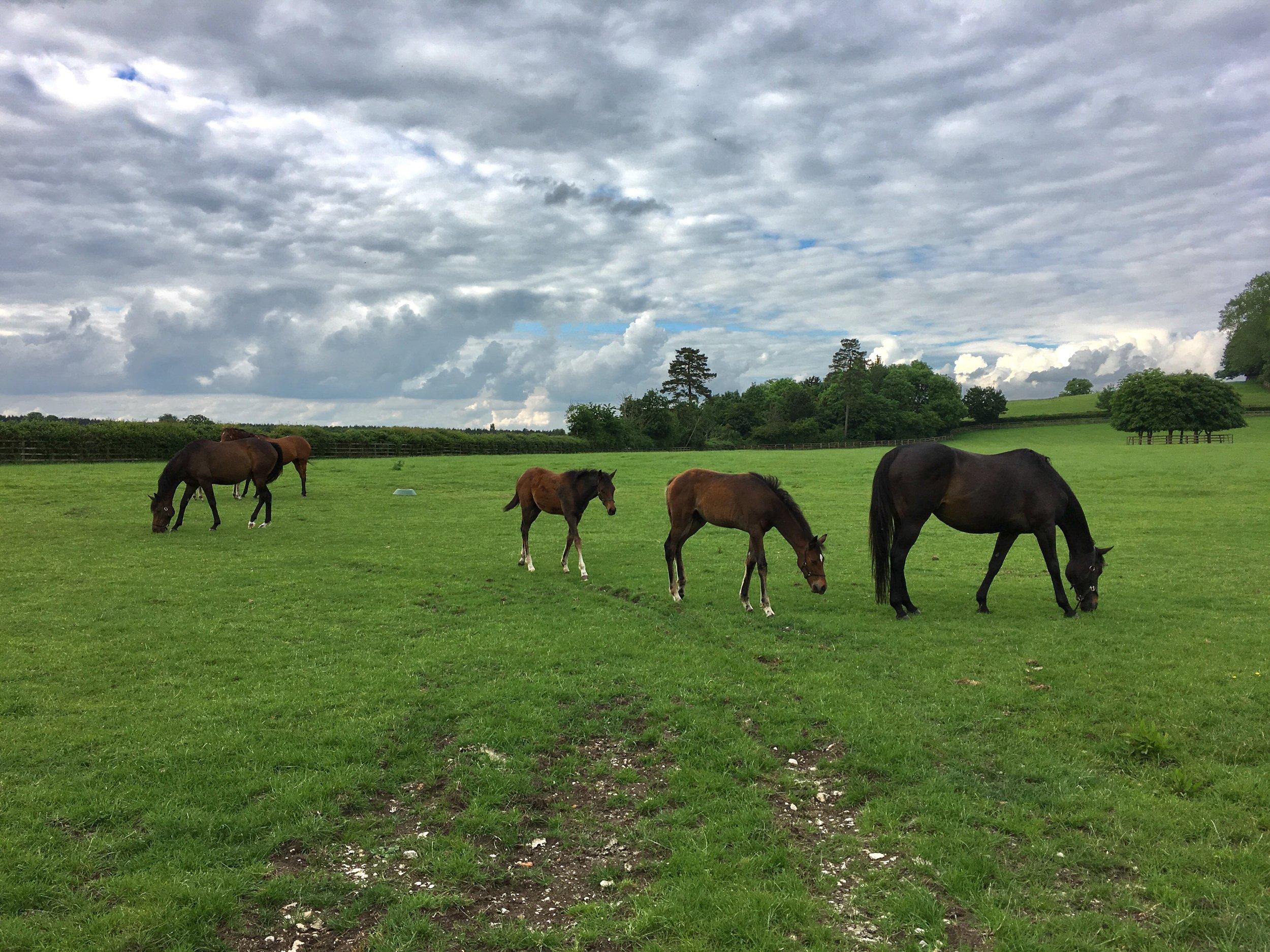 Eileen Hsieh follow that bug Waddesdon Estate horses.jpg