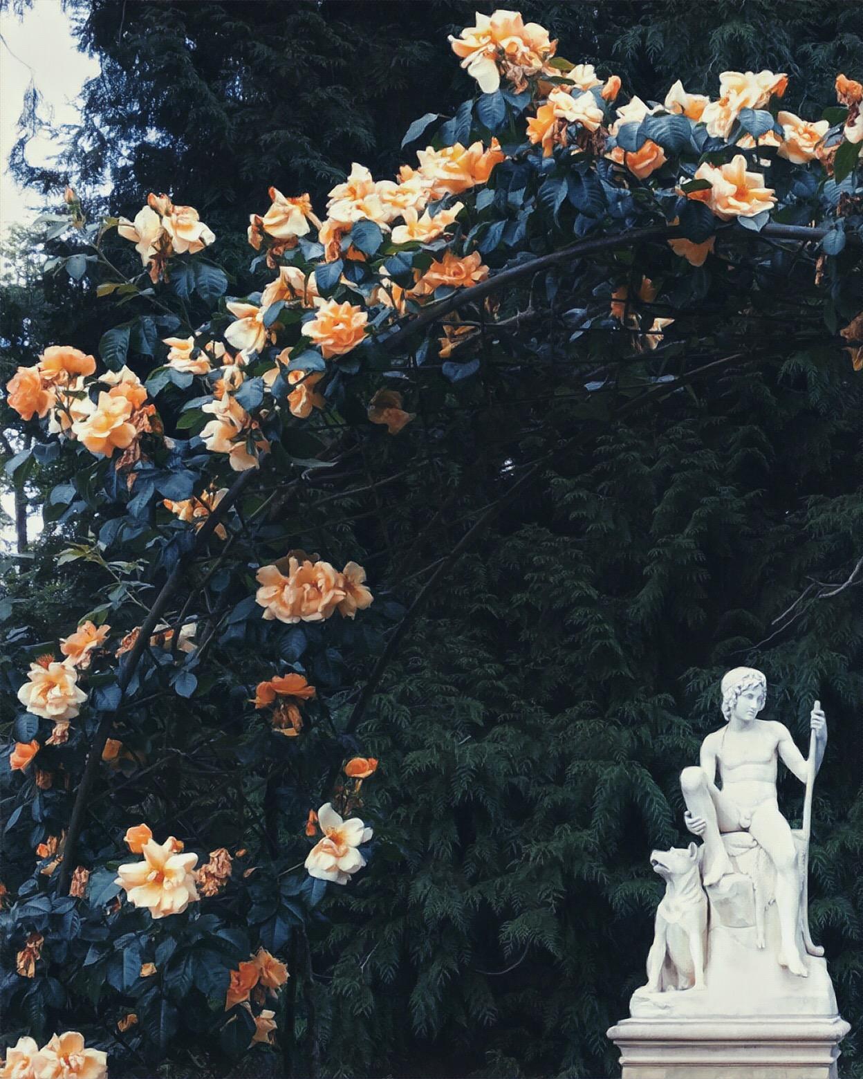 A view of the rose garden. © Eileen Hsieh / Follow That Bug
